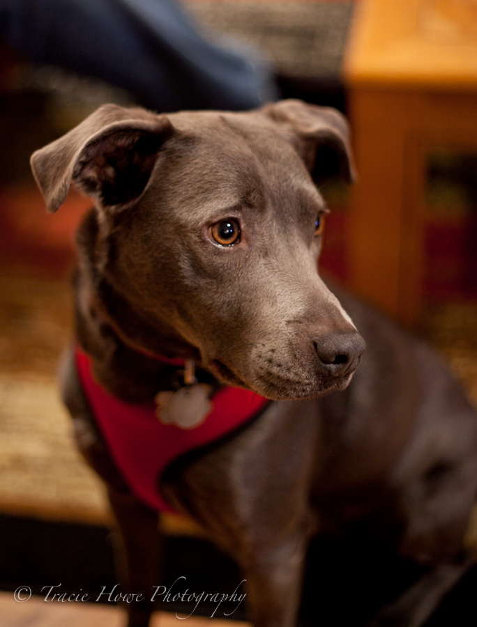 photo of dog with shallow depth of field