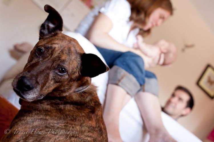 Dog in family photo
