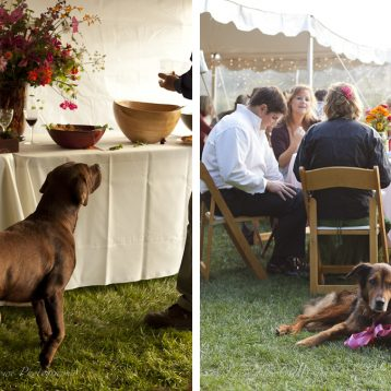 dog at Lopez Island wedding