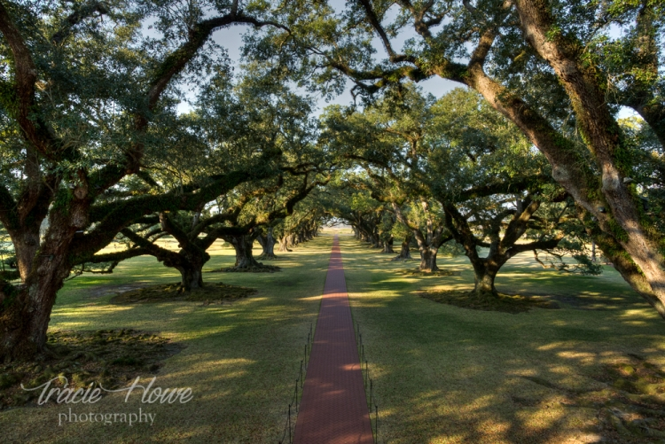The impressive alley of oaks at Oak Alley Plantation in Louisiana.