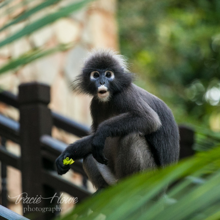 I fell in love with these expressive monkeys who came down close for a visit. This one always makes me giggle.